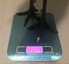 Gamefowl Digital Scale Stag 4